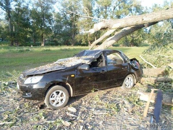 На ладу гранту упало дерево
